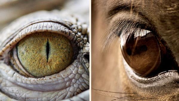 3 cerebros – El reptil que todos llevamos dentro
